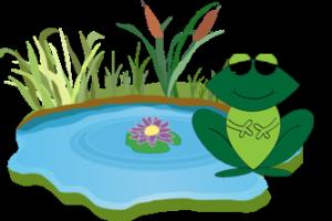 Frog pond image